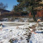 Winterpracht 2021 (5)